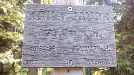 krivy-javor-19-06-08-04-12-48-b1n5qju73n.jpg