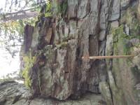 lisovska-skala-21-09-30-02-00-44-a465xkoryp.jpg